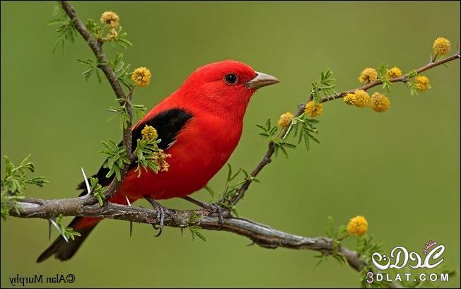 صور طيور طبيعيه صور طيور صغيره صور