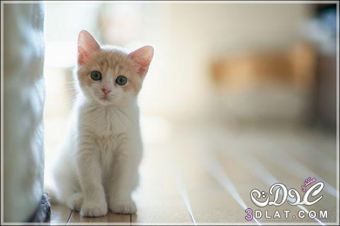 احلى صور للقطط , صور قطط حلو , قطط روعه , صور قطط نادره , صور ا جمل القطط 3dlat.net_15_15_6a97