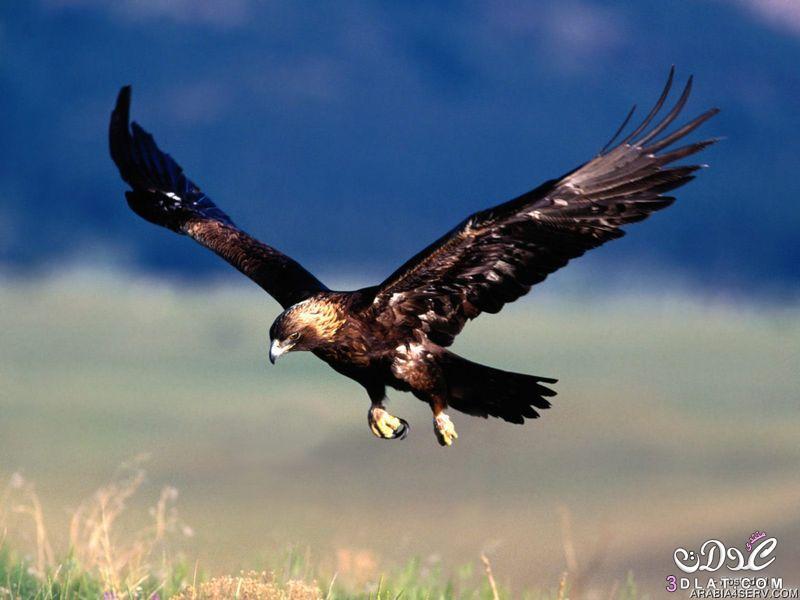 صور طيور غايه الوضوح 2015 صور طيور واضحه غايه الدقه 2015 صور طيور رائعه صور طيور جميل 3dlat.net_15_15_9d80