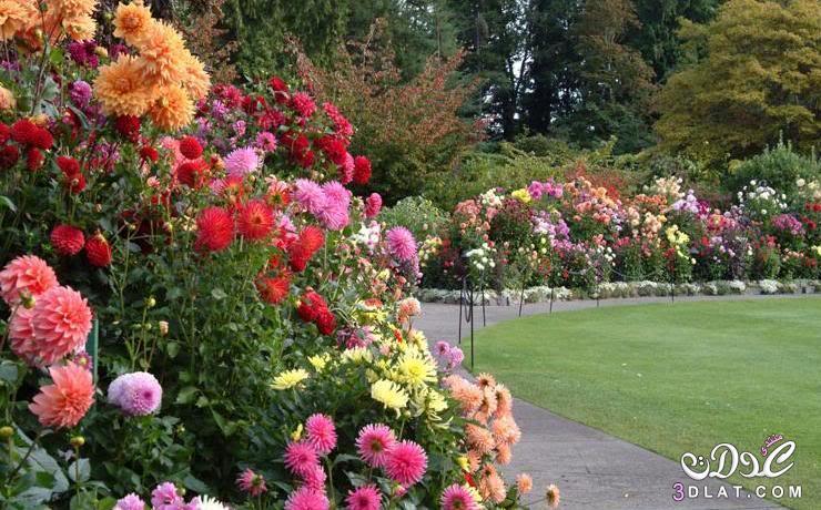 , صور احلى حدائق ممكن تشوفيها , صور حدائق طبيعيه , صور حدائق سبحان الخلاق, احلى حدائق 3dlat.net_15_15_d41a