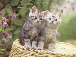 صور ا جمل القطط , احلى قطط صغيره قطط رقيقه , احلى صور للقطط , صور قطط حلو , قطط روعه 3dlat.net_15_15_df5a