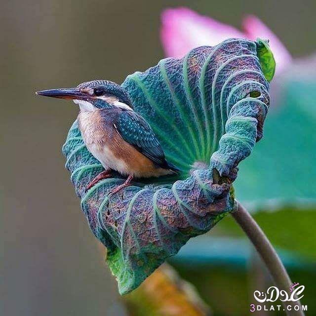صور طيور من الطبيعه 2015, صور طيور غريبة ,طيور بألوان جميلة 3dlat.net_15_15_e9f1