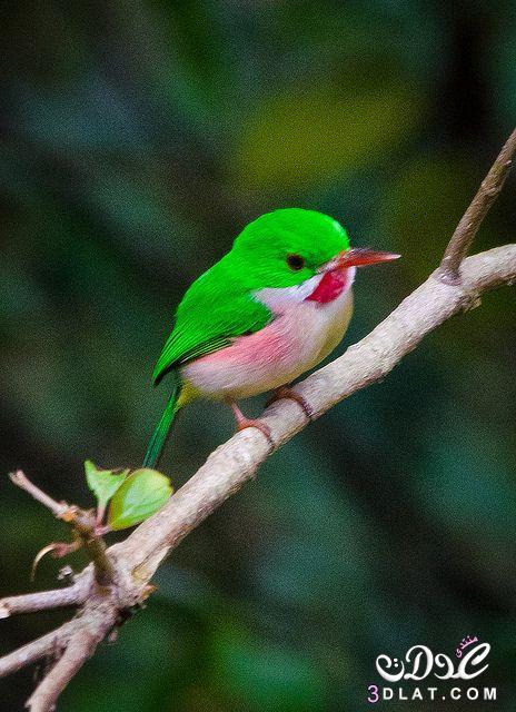صور طيور من الطبيعه 2015, صور طيور غريبة ,طيور بألوان جميلة 3dlat.net_15_15_f20d