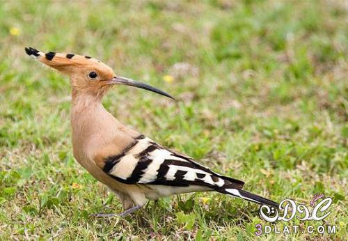 طيور بالوان غريبه , صور طيور مختلفه , صور طيور متنوعه , احلى طيور ممكن تشوفها , صور 3dlat.net_15_15_fbdd