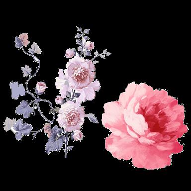 تحميل فلتر طوق الورد