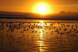خواطر عن غروب الشمس وجمال وهدوء البحر نسيم آڸدک ريآت