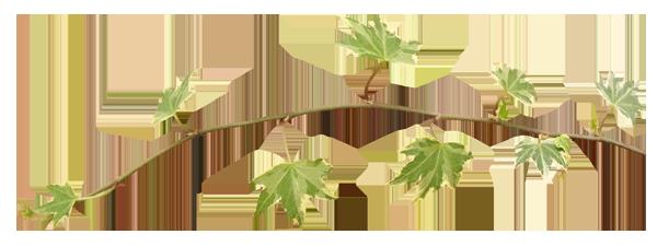 سكرابز اوراق الشجر للتصميم اجمل سكرابز ورود للتصميم بالوان جذابه بدون تحميل حياه الروح 5
