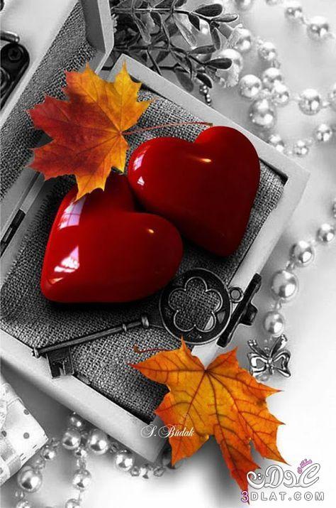 اجمل الصور الرومانسية رومانسية وعشق رومانسية 3dlat.net_23_17_0b6a