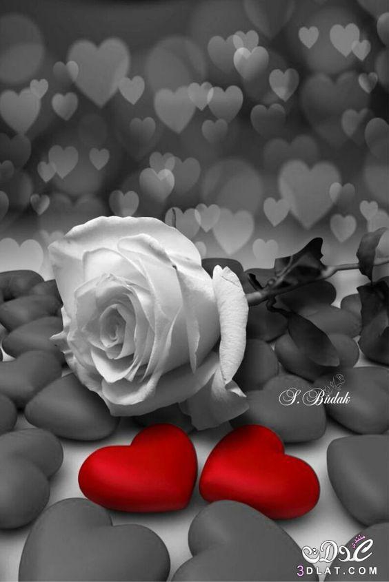اجمل الصور الرومانسية رومانسية وعشق رومانسية 3dlat.net_23_17_82d6