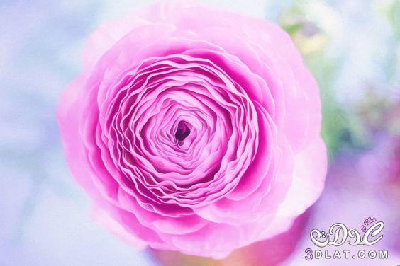 اجمل الصور الرومانسية رومانسية وعشق رومانسية 3dlat.net_23_17_8707