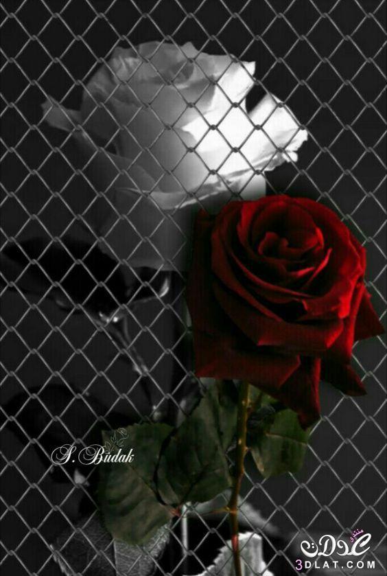 اجمل الصور الرومانسية رومانسية وعشق رومانسية 3dlat.net_23_17_fabe