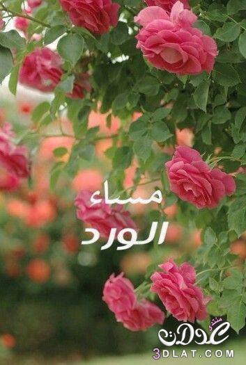 مسجات مسائية بالصور 2019 مساء الخير 3dlat.net_24_16_a1be