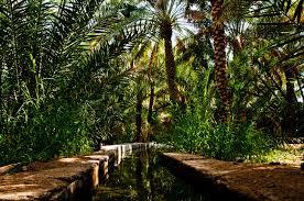 صور من الطبيعه الخليجيه 2015 صور من بساتين الخليج 2015 اجمل الصور الطبيعيه فى الخليج 3dlat.net_26_15_5d47
