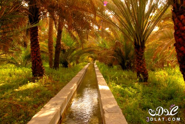 الطبيعه الخليجيه 2019 بساتين الخليج 2019 3dlat.net_26_15_5d47
