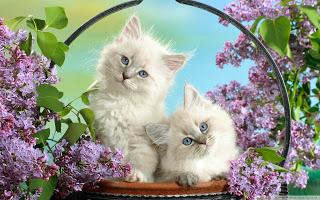 صورقطط رومانسية 2017 ,صور قطط صغيرة2017 , صور قطط صغيرة كيوت,صور قطط صغيرة لطيفة 3dlat.net_26_15_7618