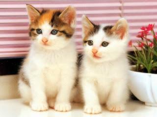 صورقطط رومانسية 2017 ,صور قطط صغيرة2017 , صور قطط صغيرة كيوت,صور قطط صغيرة لطيفة 3dlat.net_26_15_b962