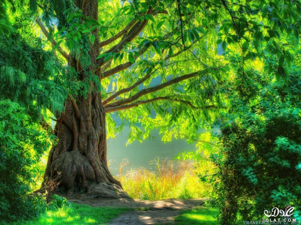 اجمل الصور الطبيعية في العالم Hd