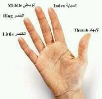 هل تعلم سبب اختلاف الأصابع عن بعضها في الطول ؟ 3dlat.net_28_15_2494